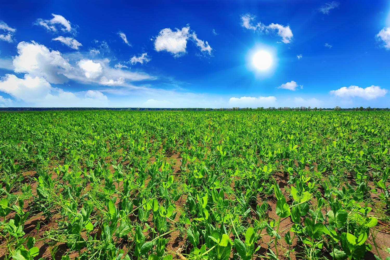 FarmSm.jpg