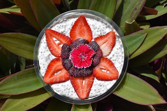 Coconut Chia Pudding topped with local strawberries and black raspberries #organic #nosugar #vegan #glutenfree