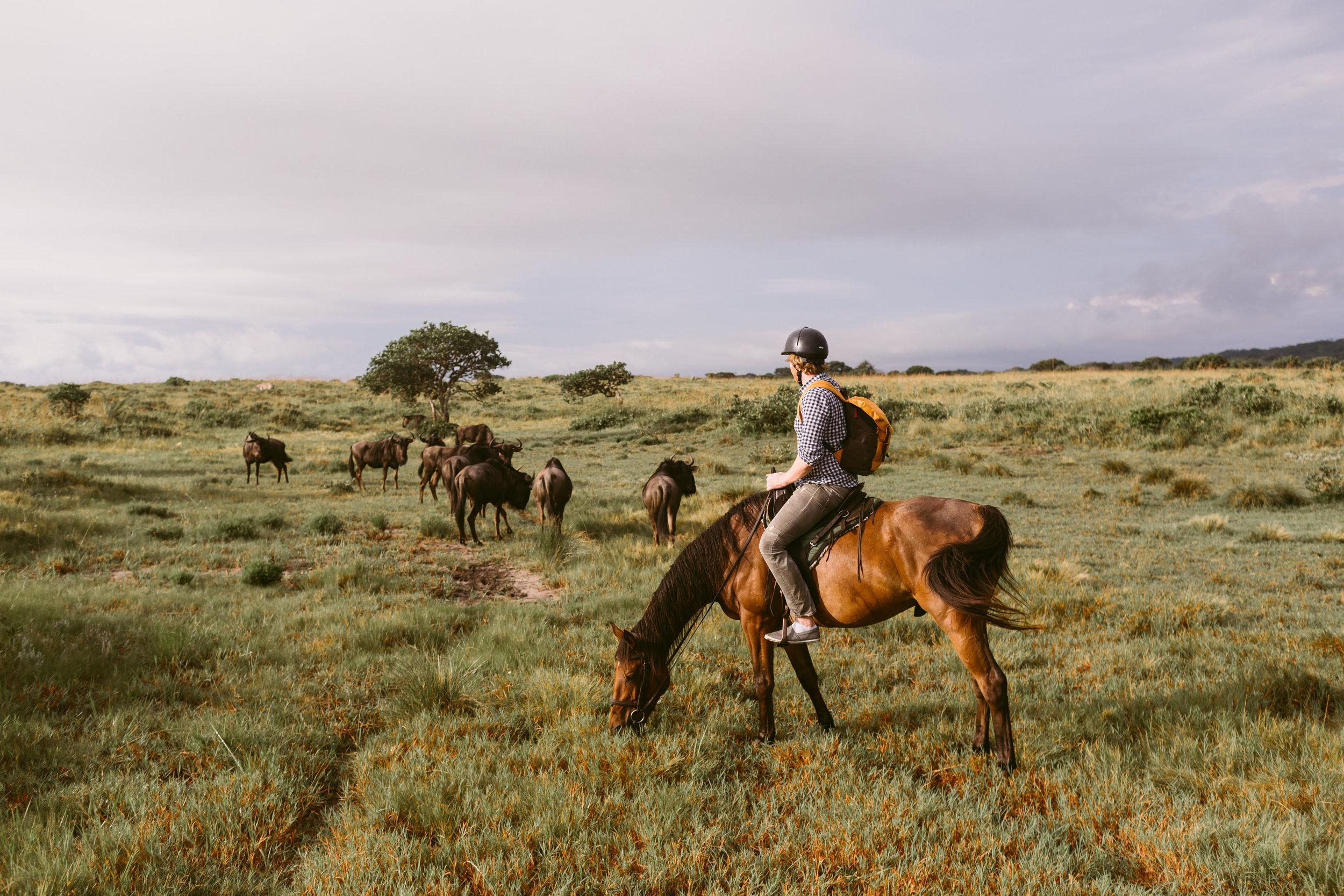 Wild Routes Horseback Safari Durban Tour 2.jpg