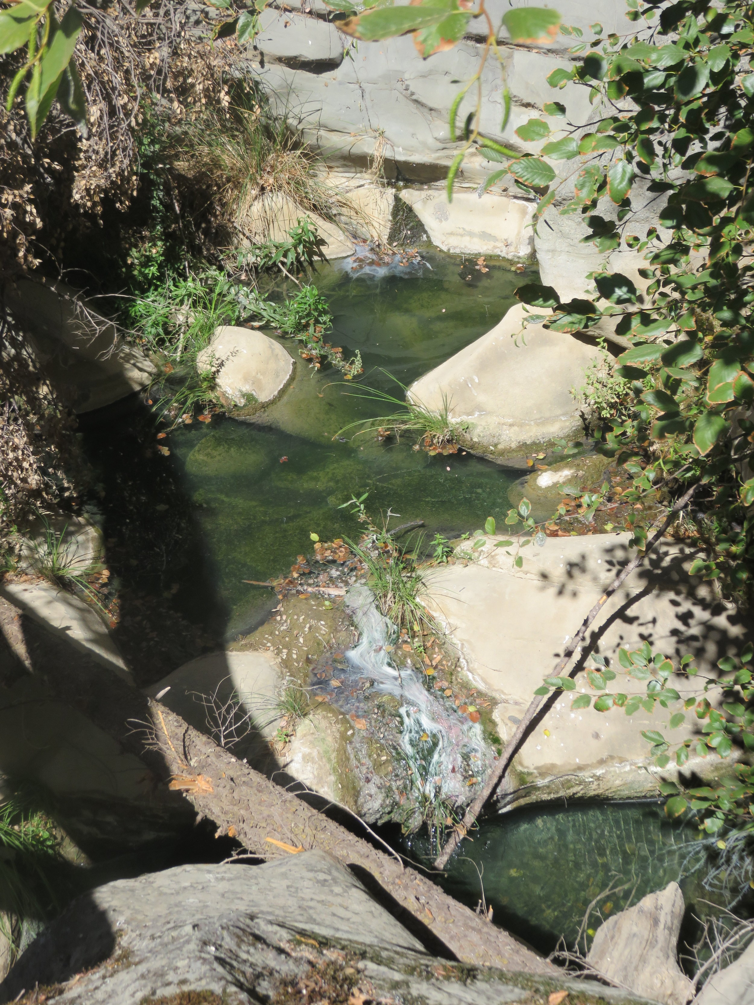 This little oasis of water is a wonderful site in drought stricken California.