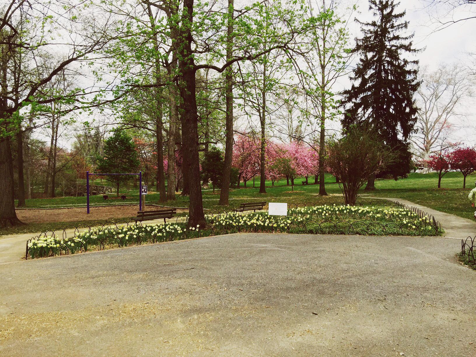 foep_daffodil_1.jpg
