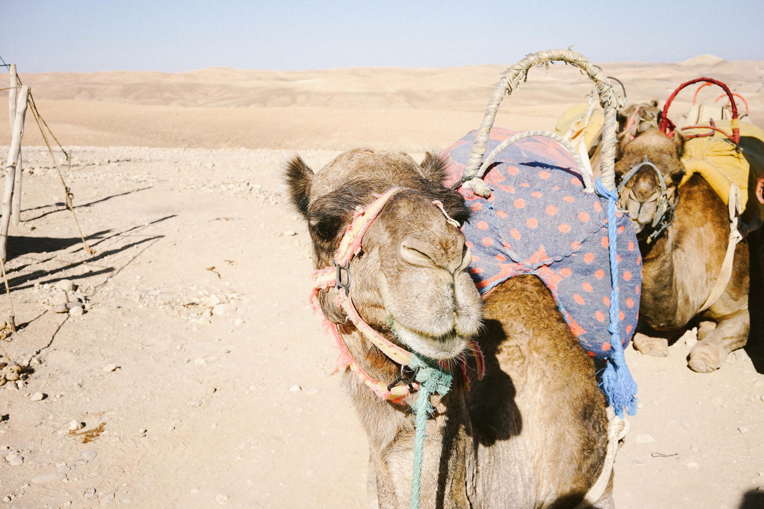 Camel Ride Through Agafay Desert