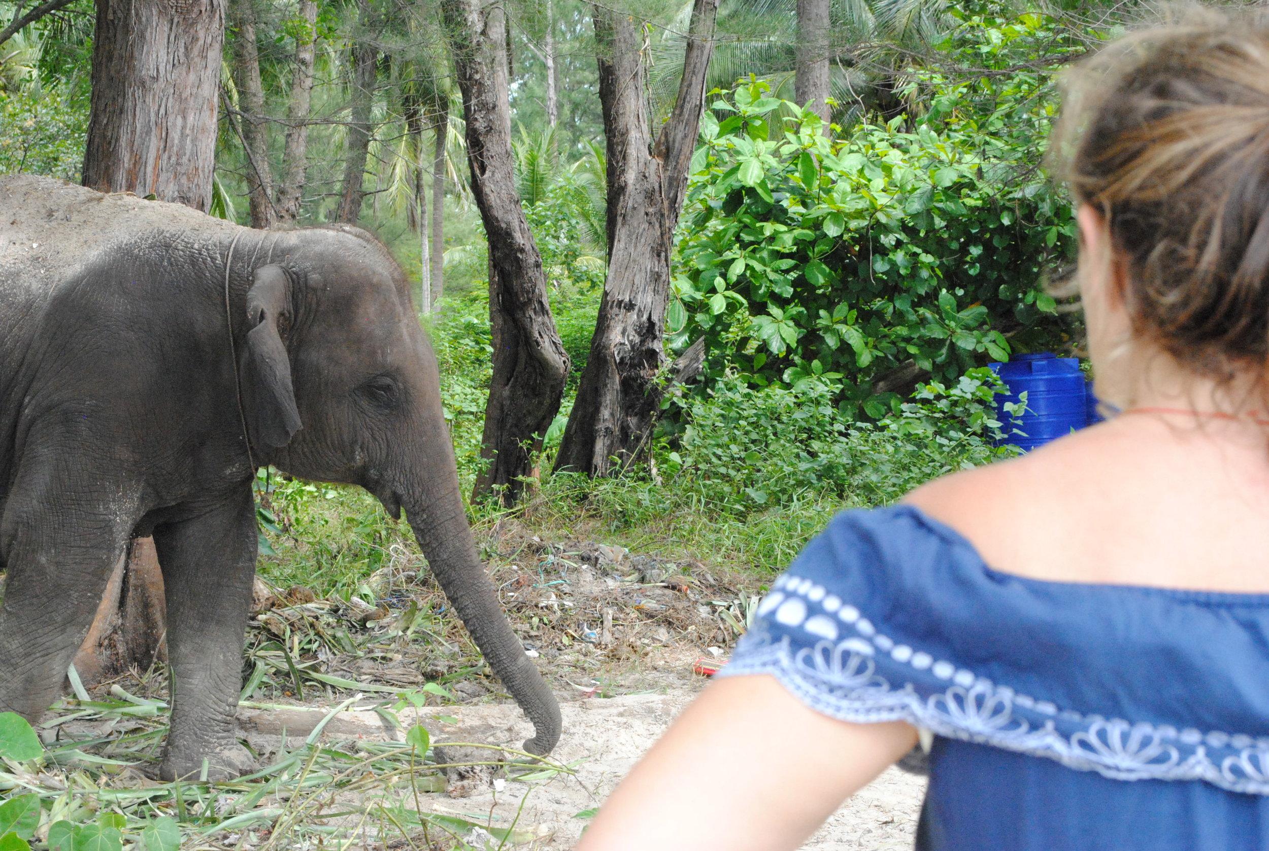 Thai Elephant, Meet Kat