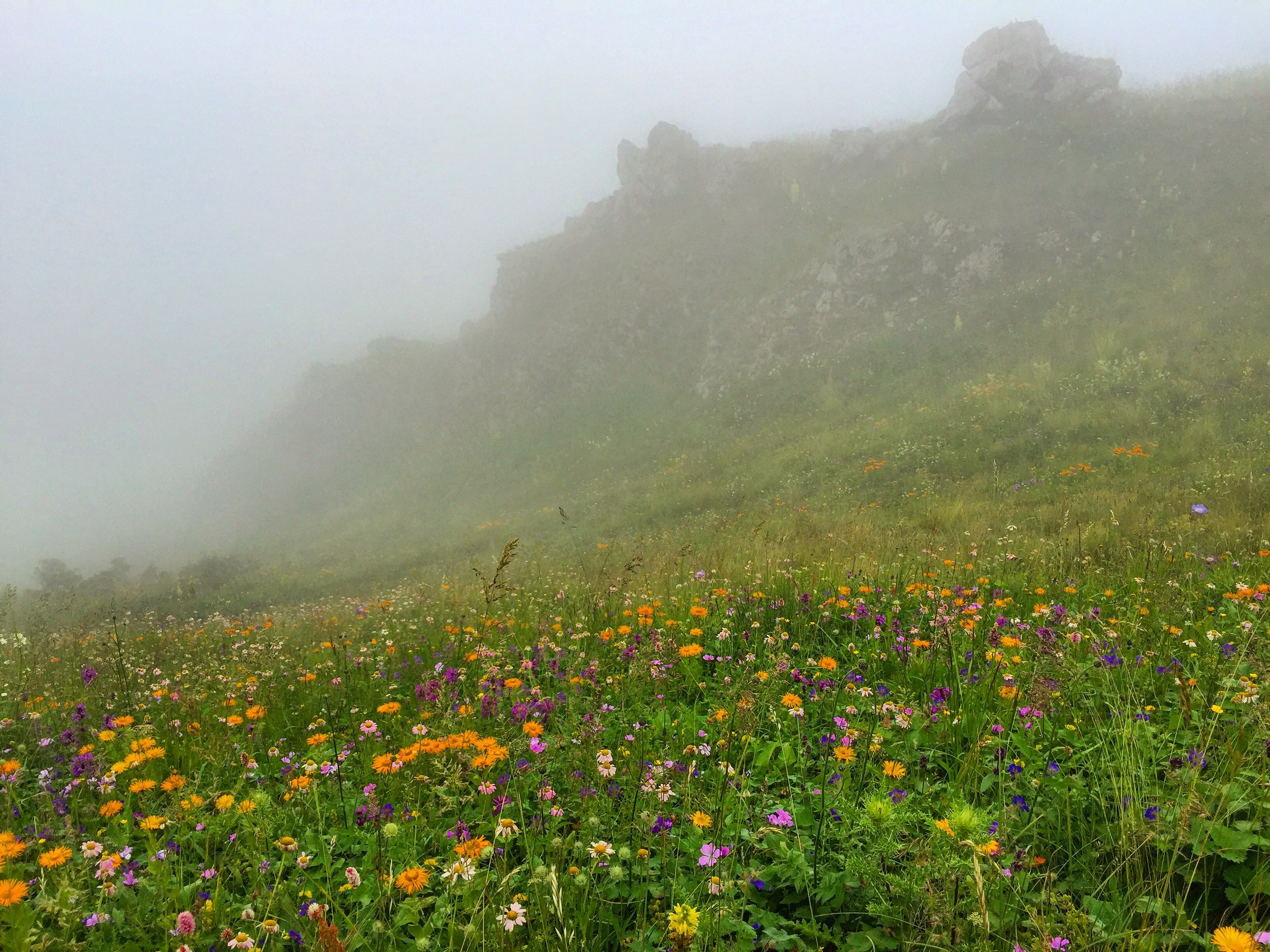 Wildflowers on the mountain