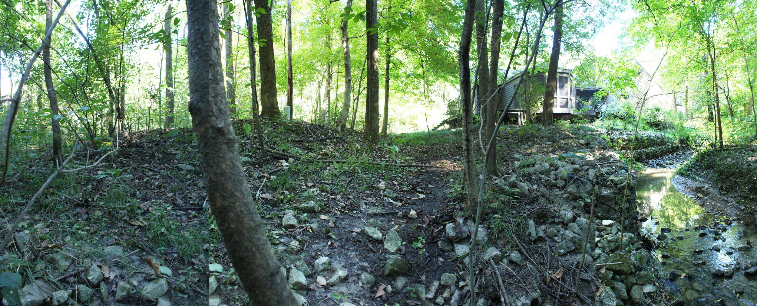 Woodland Restoration Zone B_swale