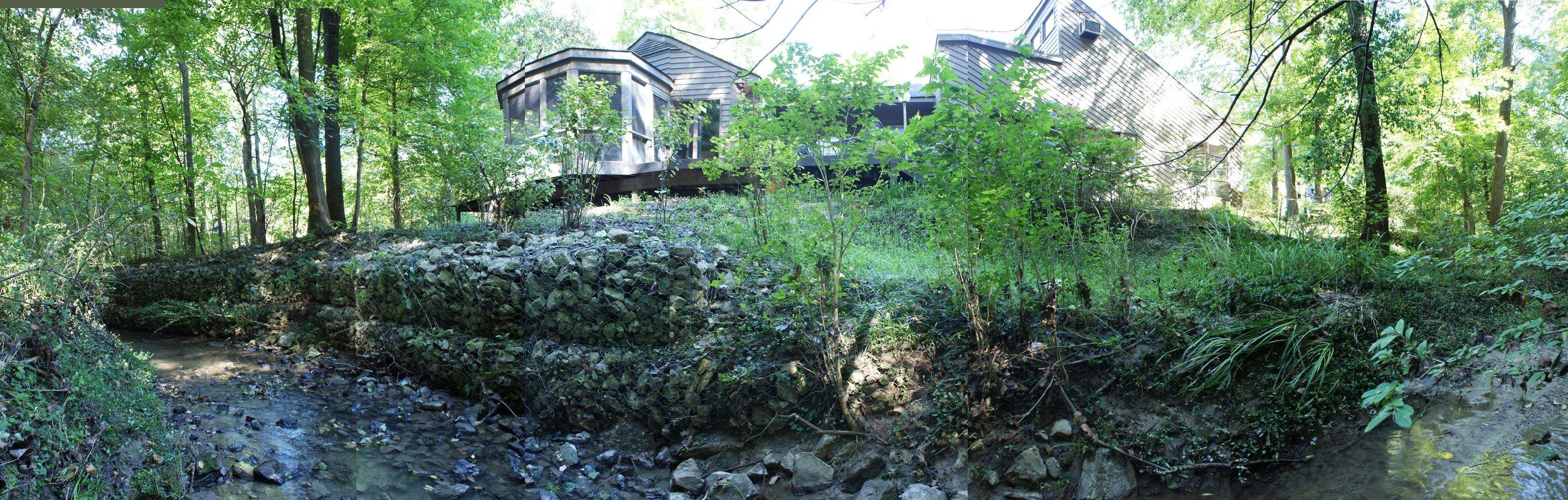Woodland Restoration Zone C_edge