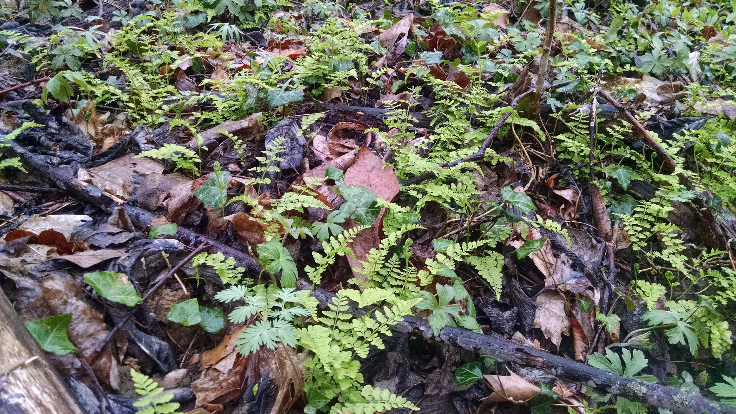Woodland floor emerges in St. Clair County early Spring