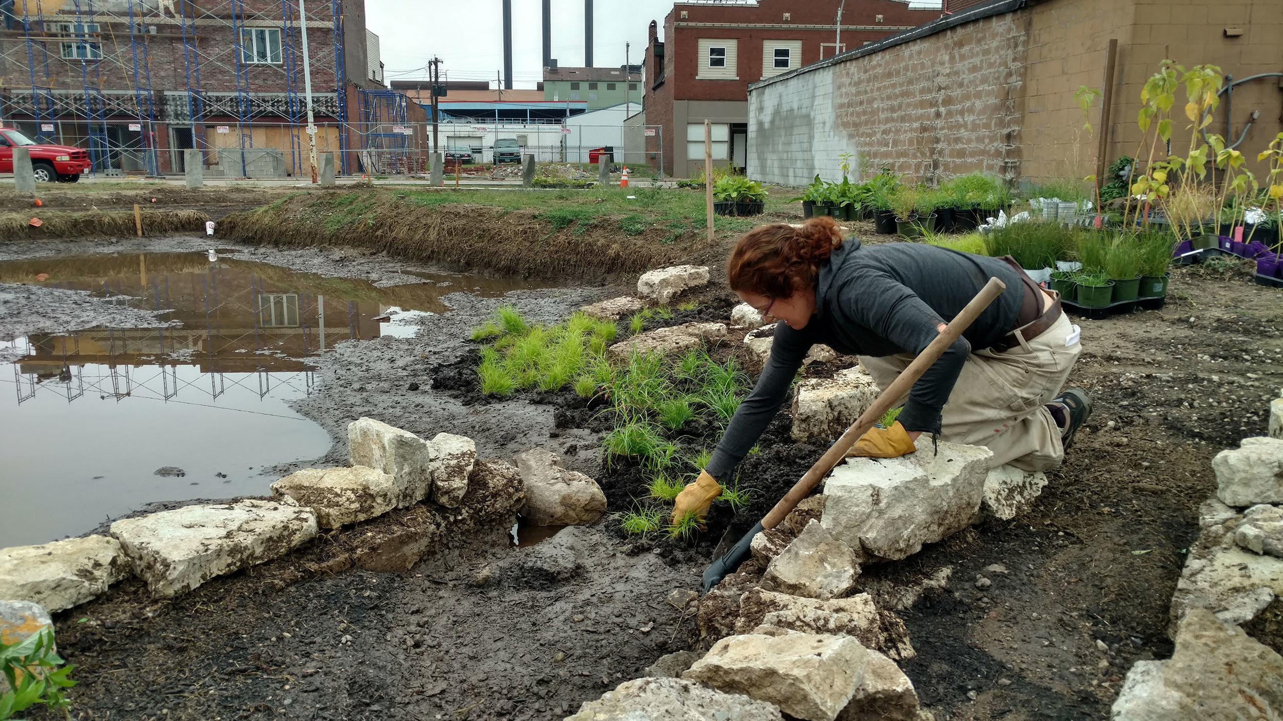 planting the bioretention.jpg