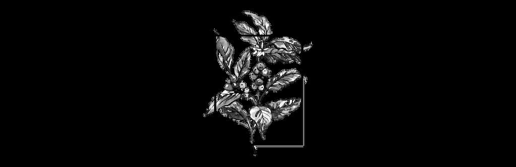 Logo-primavera-twcs-small.png
