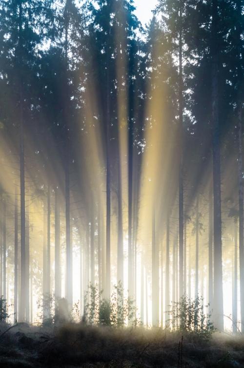 PLR tree 1.jpg