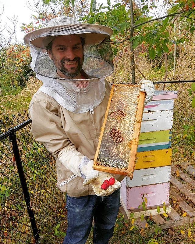Shana Tova.  Crabapple and fresh honey.#urbanbeekeeping #torontohoney
