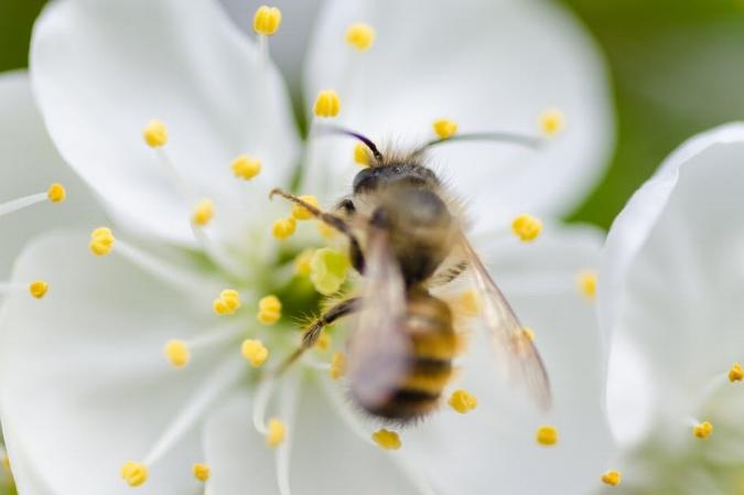 pollen.jpeg