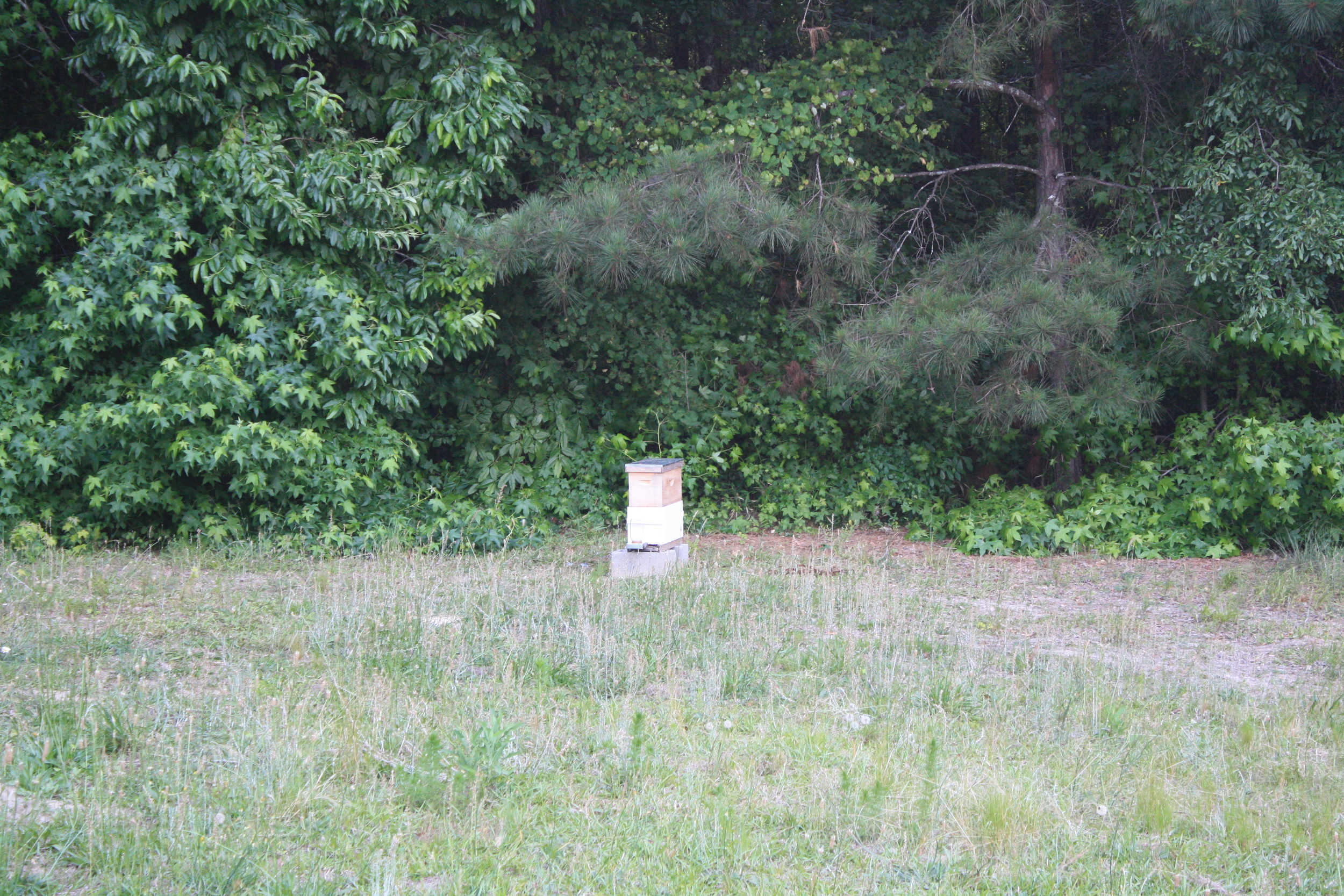 this is a relatively young hive, a two-story nuc started about 1 month ago