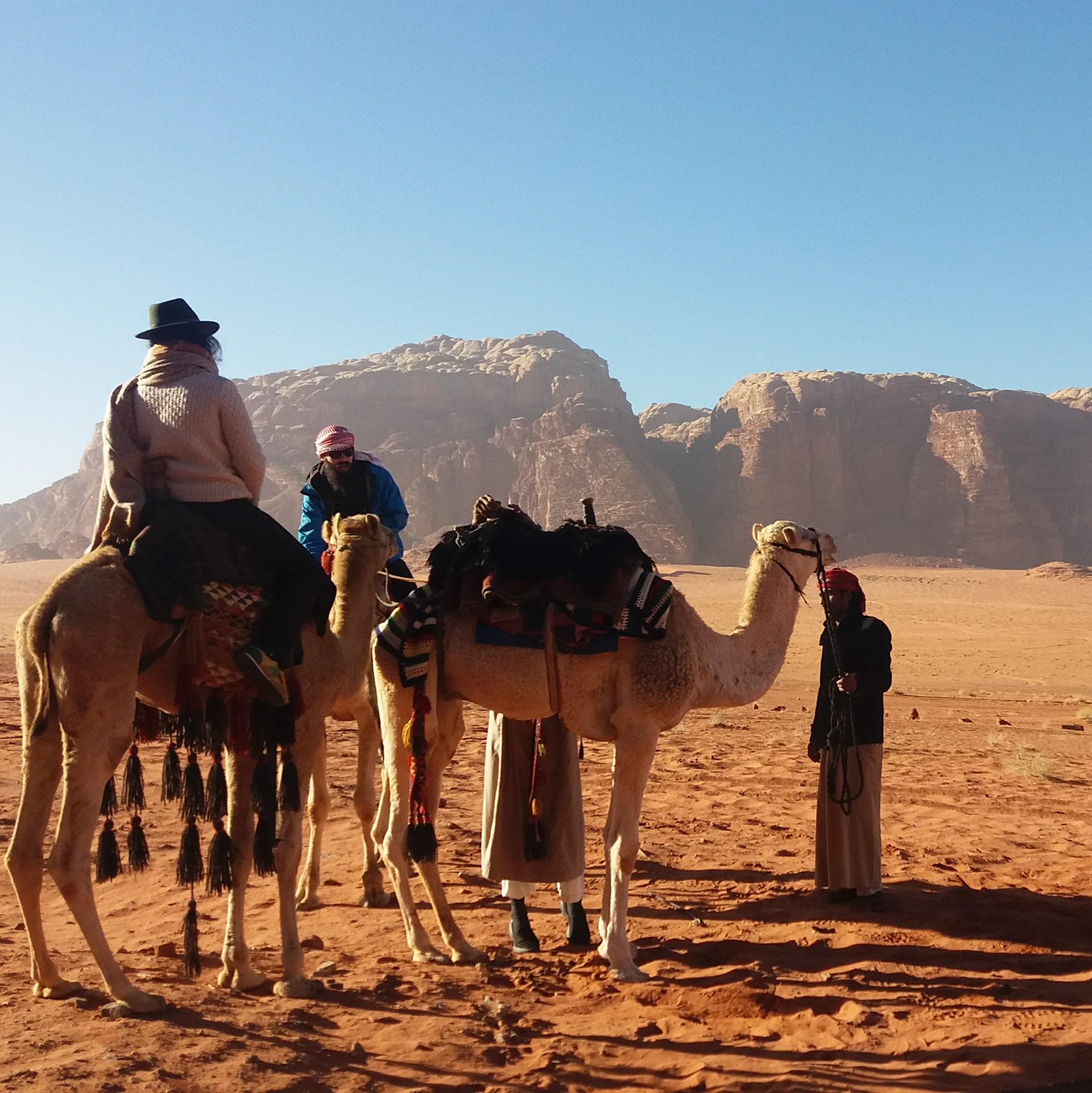wadi-rum-multi-day-tour-camel.jpg