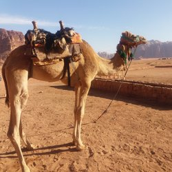 Wadi Rum Camel Ride - Wadi Rum Nature Tours