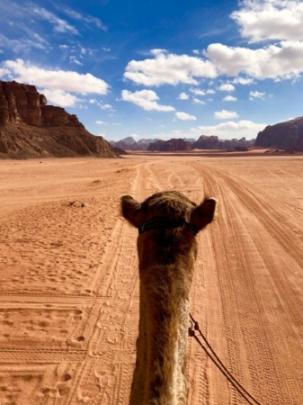 Wadi Rum Nature Tours - One Day Camel Tour