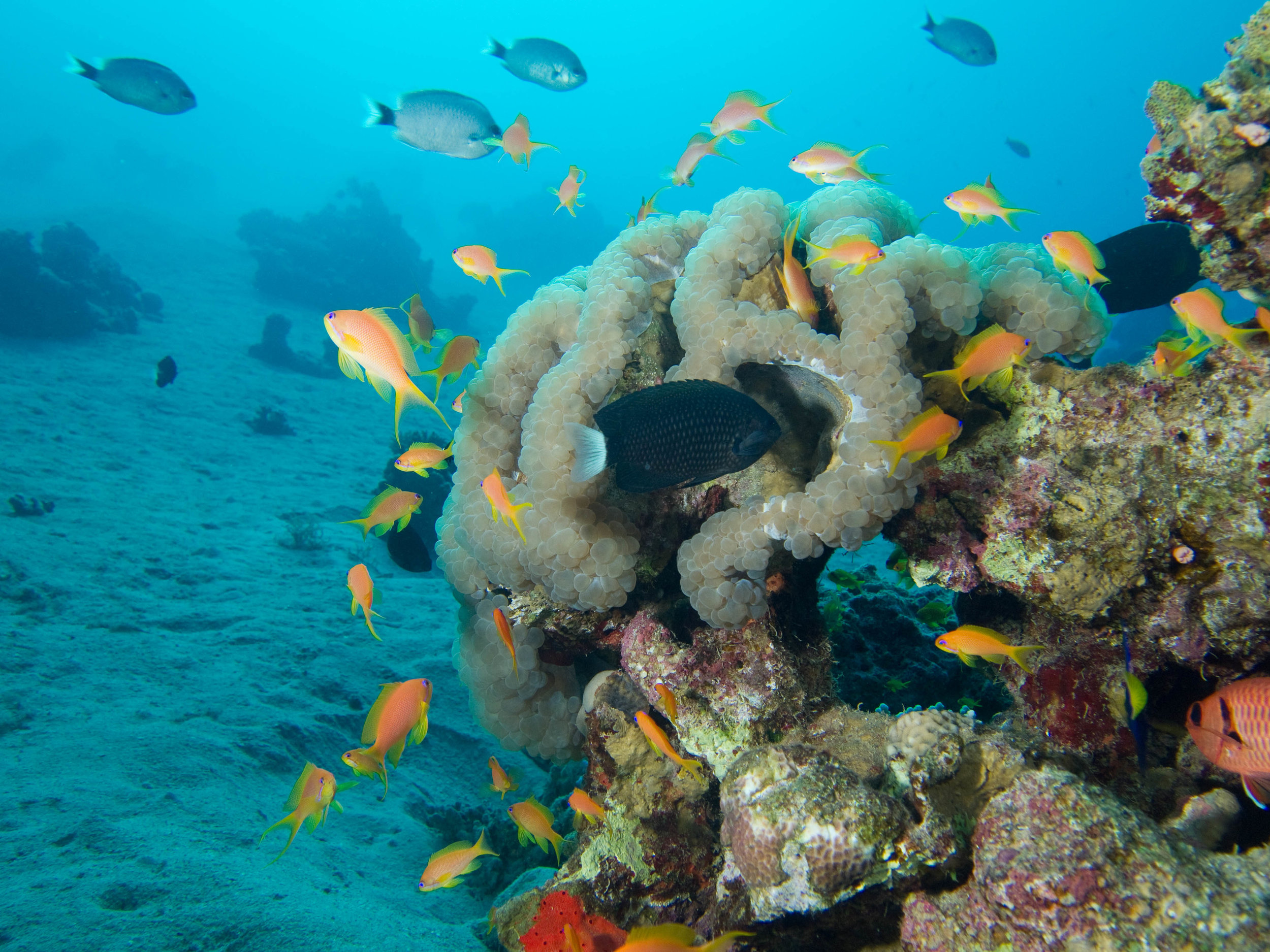 Aquatic life in the Red Sea near Aqaba. Photo taken by Joi Ito, distributed under  CC BY 2.0  license.