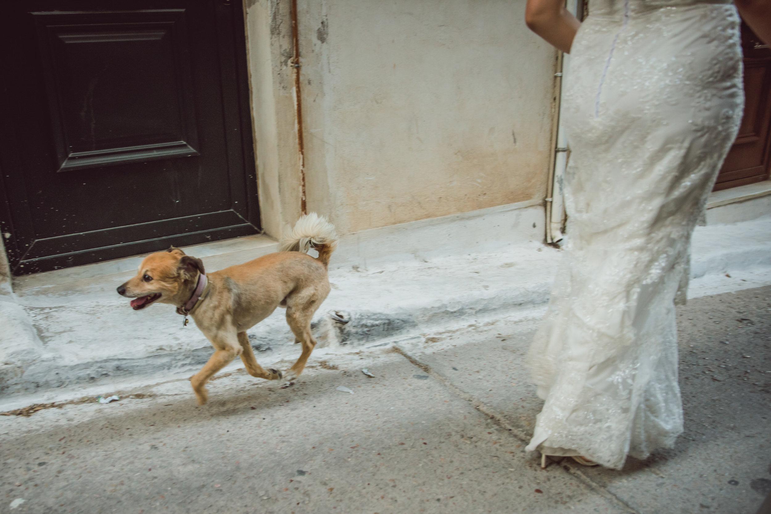 GreeceWedding-Tricia&Will-DayAfter-36.jpg