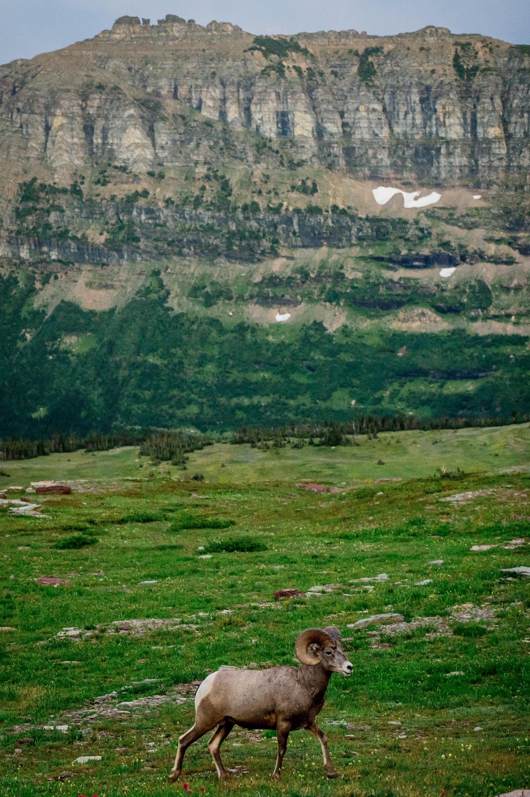 GlacierNationalPark2019-0643.jpg
