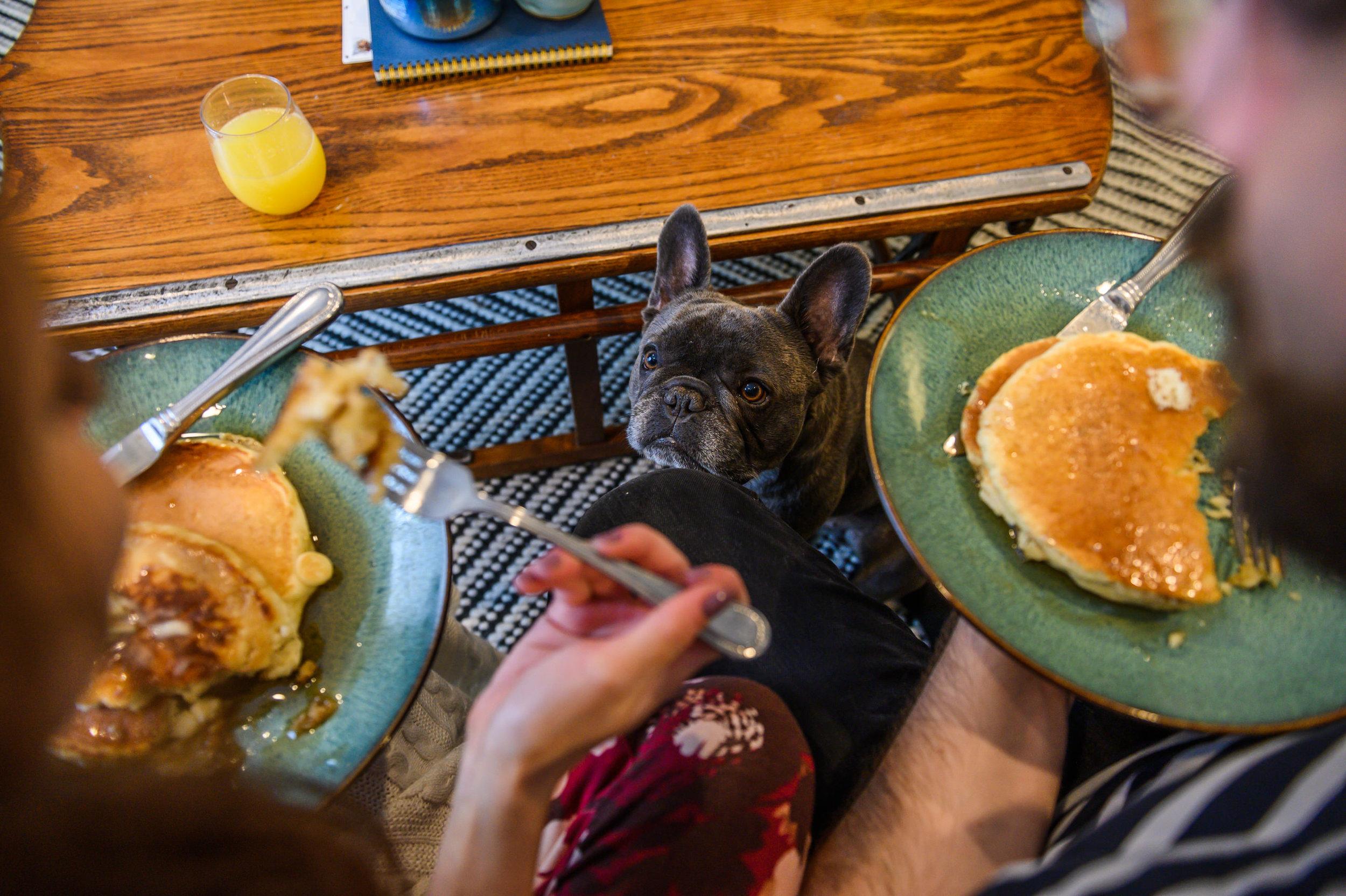 Pancakes&Puppies-VAEngagement-Emily&Mitch-2131.jpg