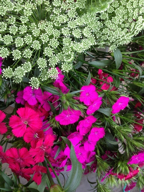 ammi and dianthus.JPG