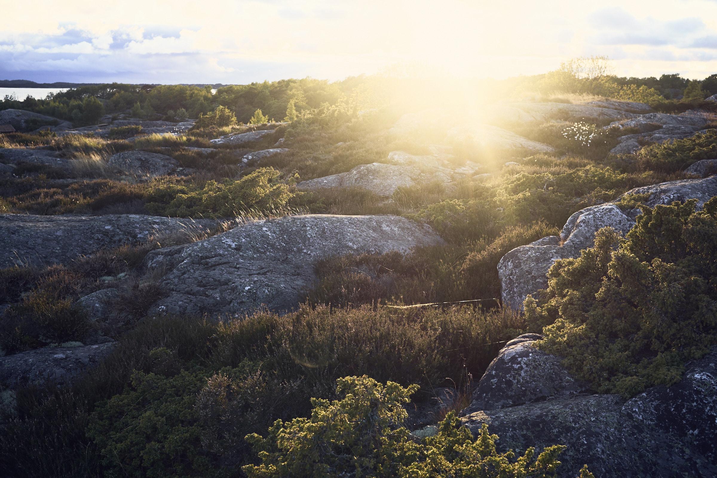 Images Only for RFTB__DSF9325_© Kristofer Samuelsson Photography 2016.jpg