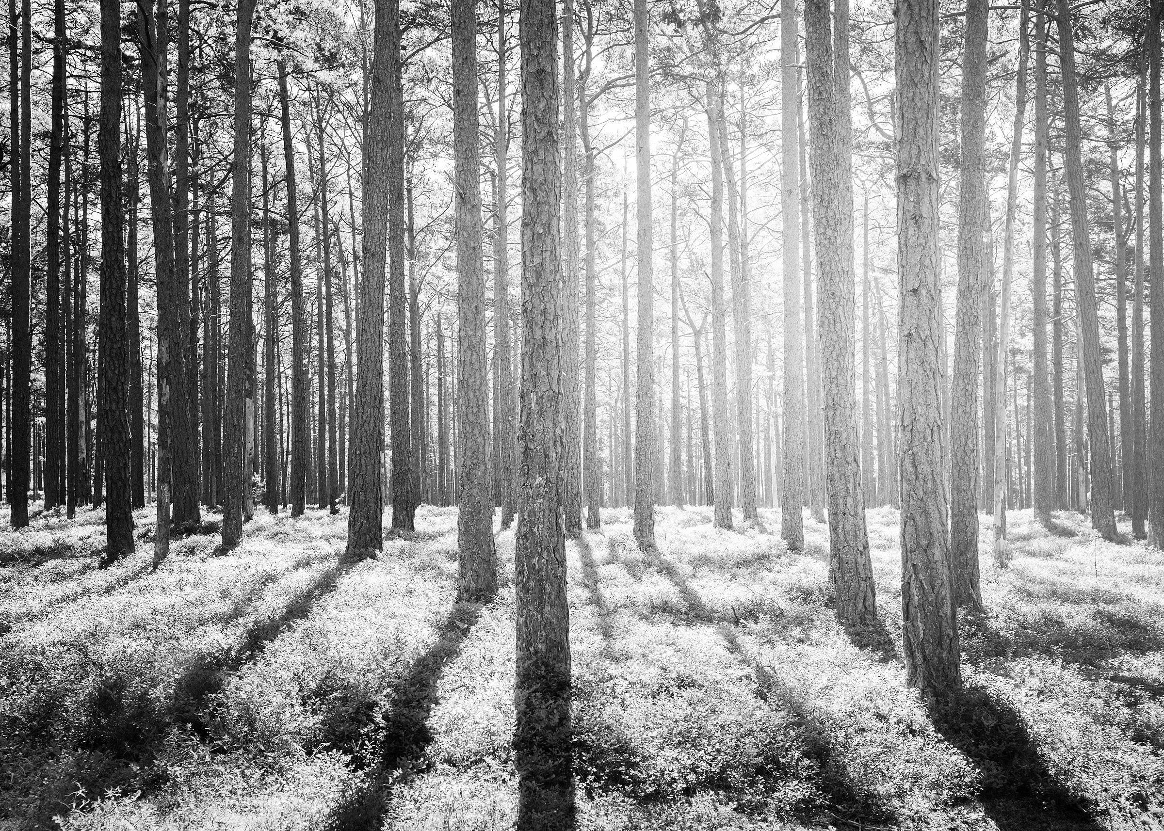 Portfolio_421_Landscape Scandinavian Forest DSC0580_KRISTOFER SAMUELSSON PHOTOGRAPHY.jpg