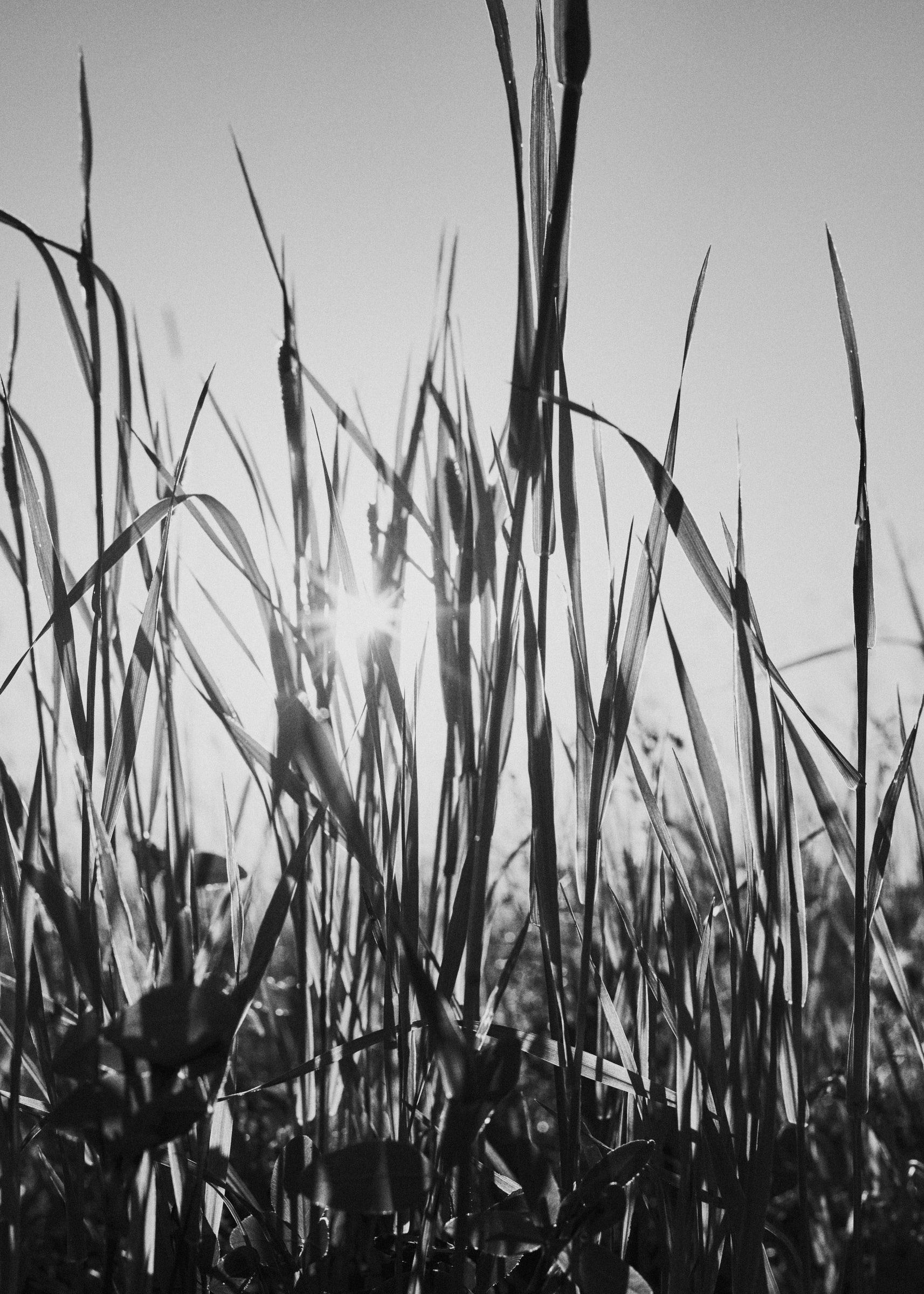 Landscape_DSC9826_KRISTOFER SAMUELSSON PHOTOGRAPHY.jpg