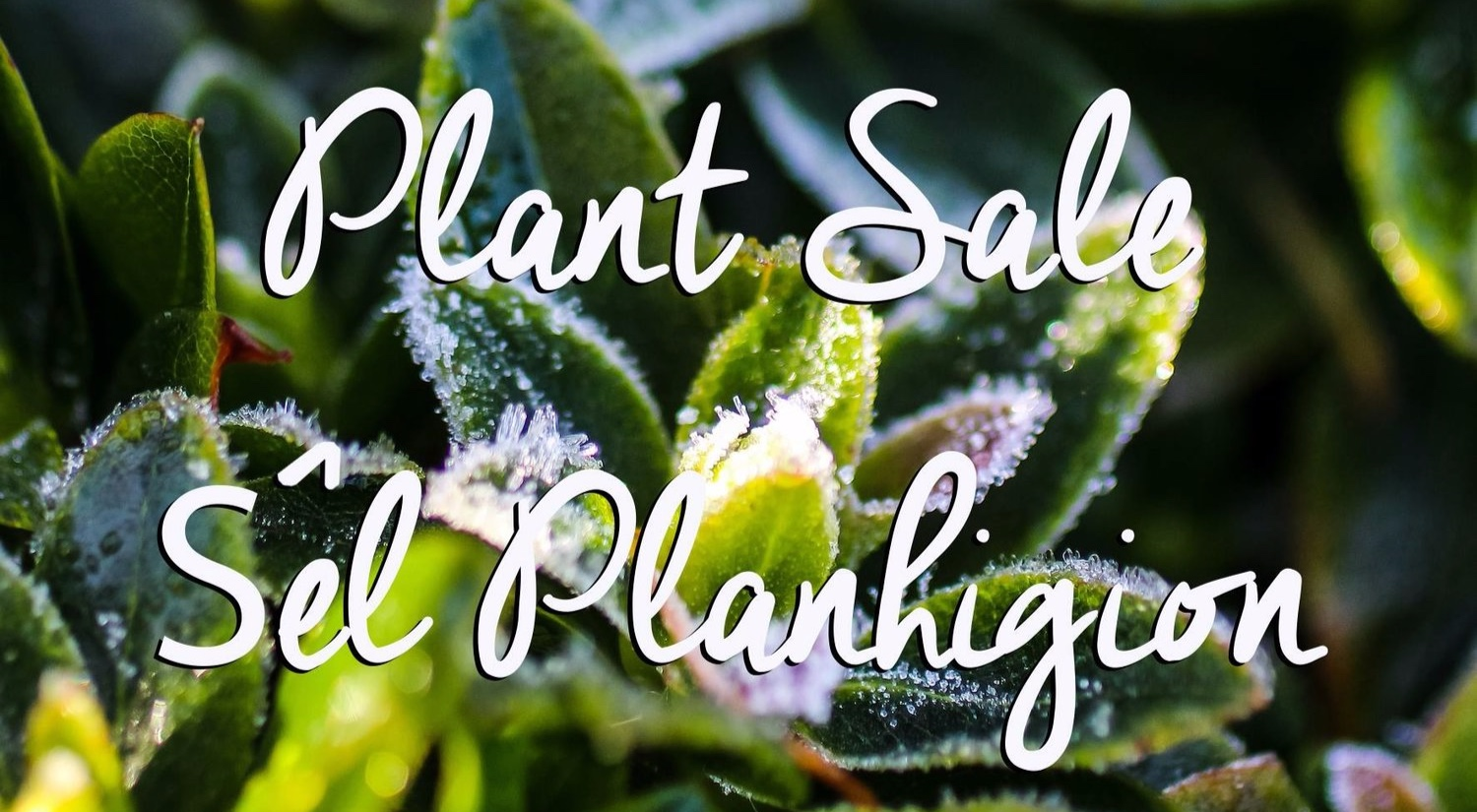 Huge plant sale on until the end of February!