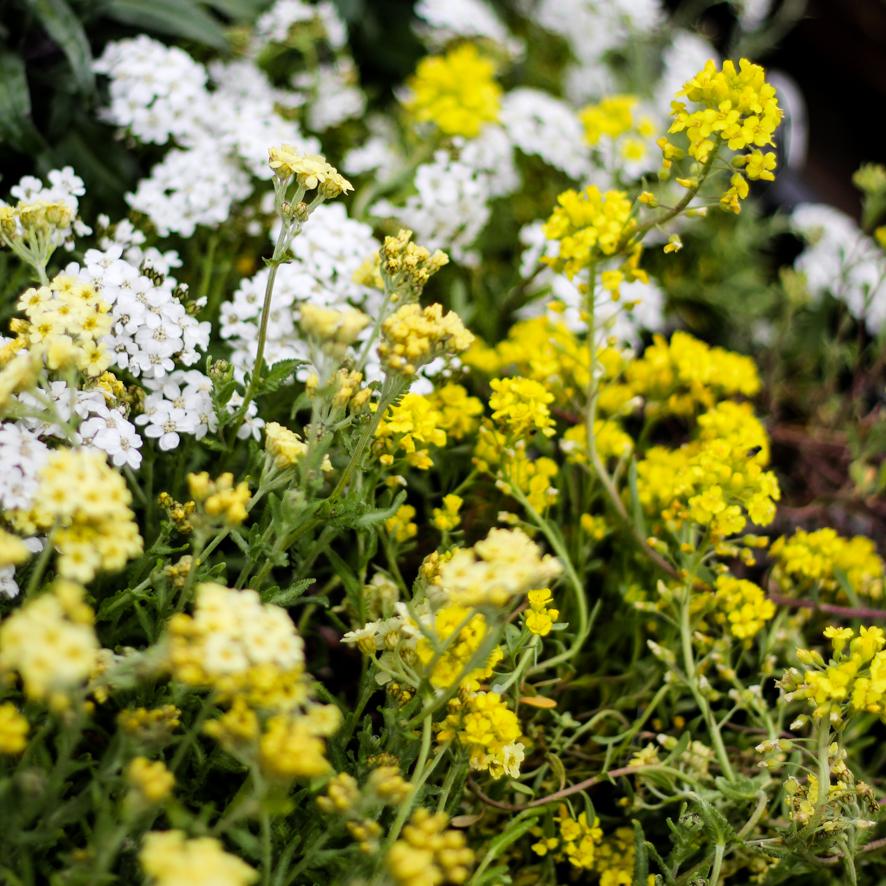 flowers May 3rd-33.JPG