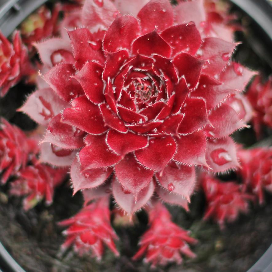 flowers May 3rd-14.JPG