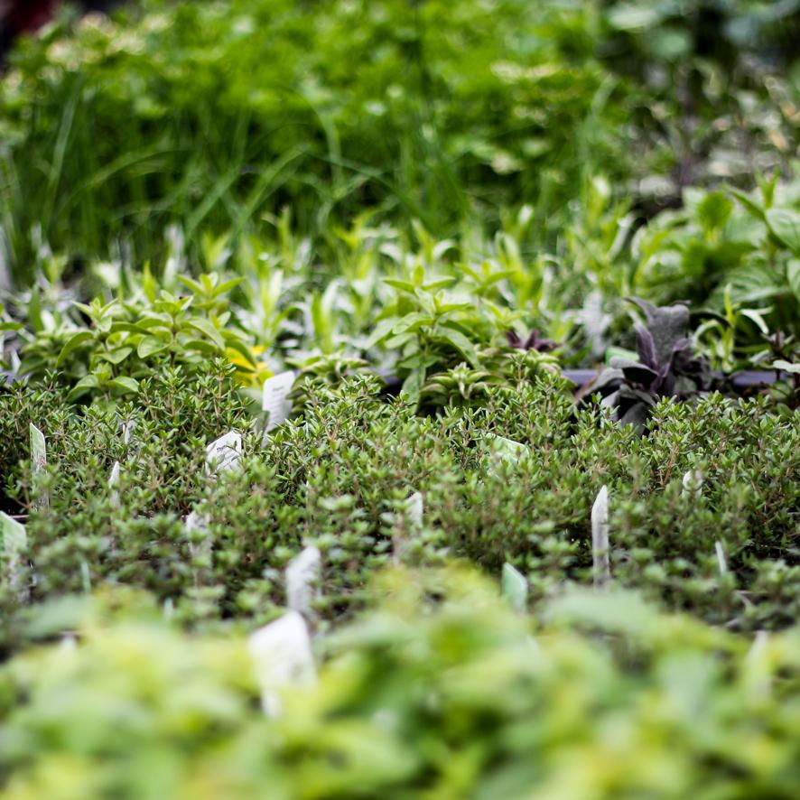 flowers May 3rd-11.JPG