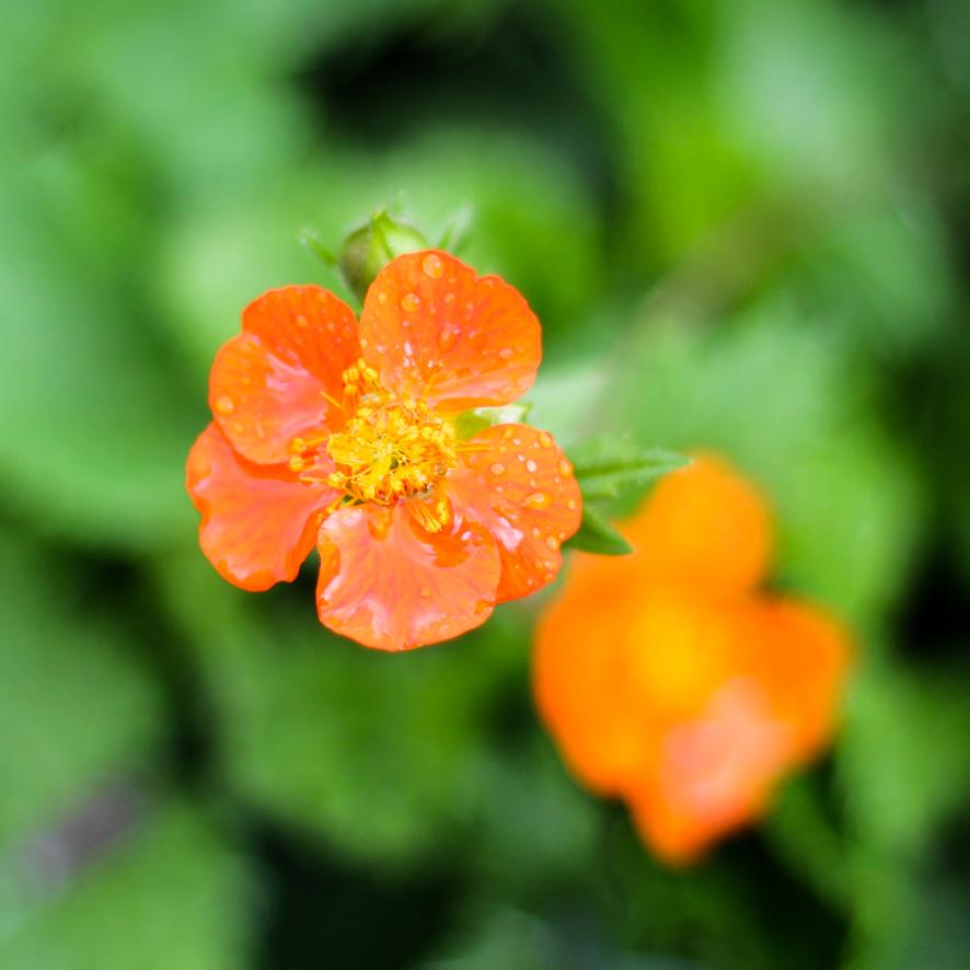 flowers May 3rd-10.JPG