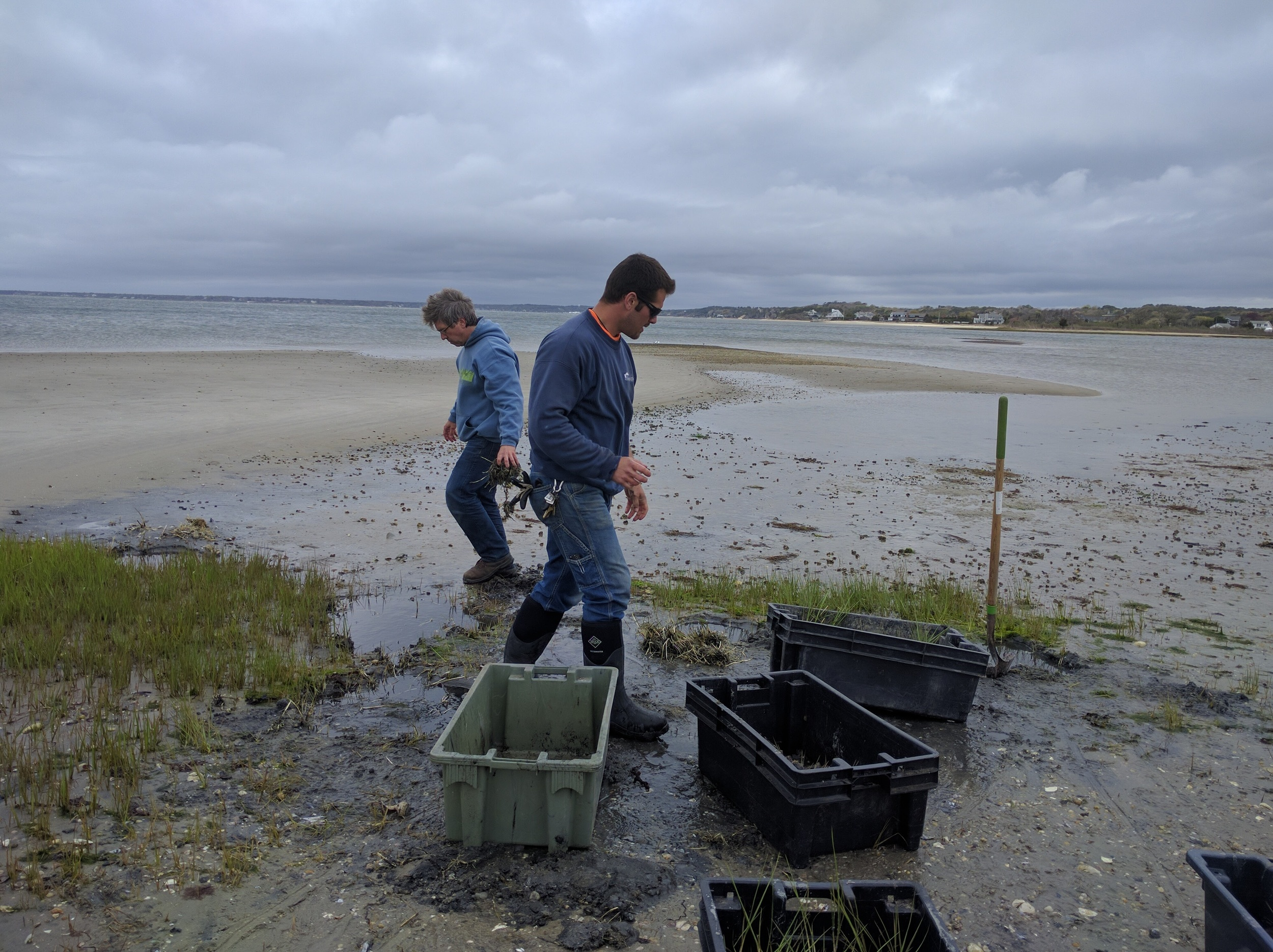 Duck Grass Transplanting