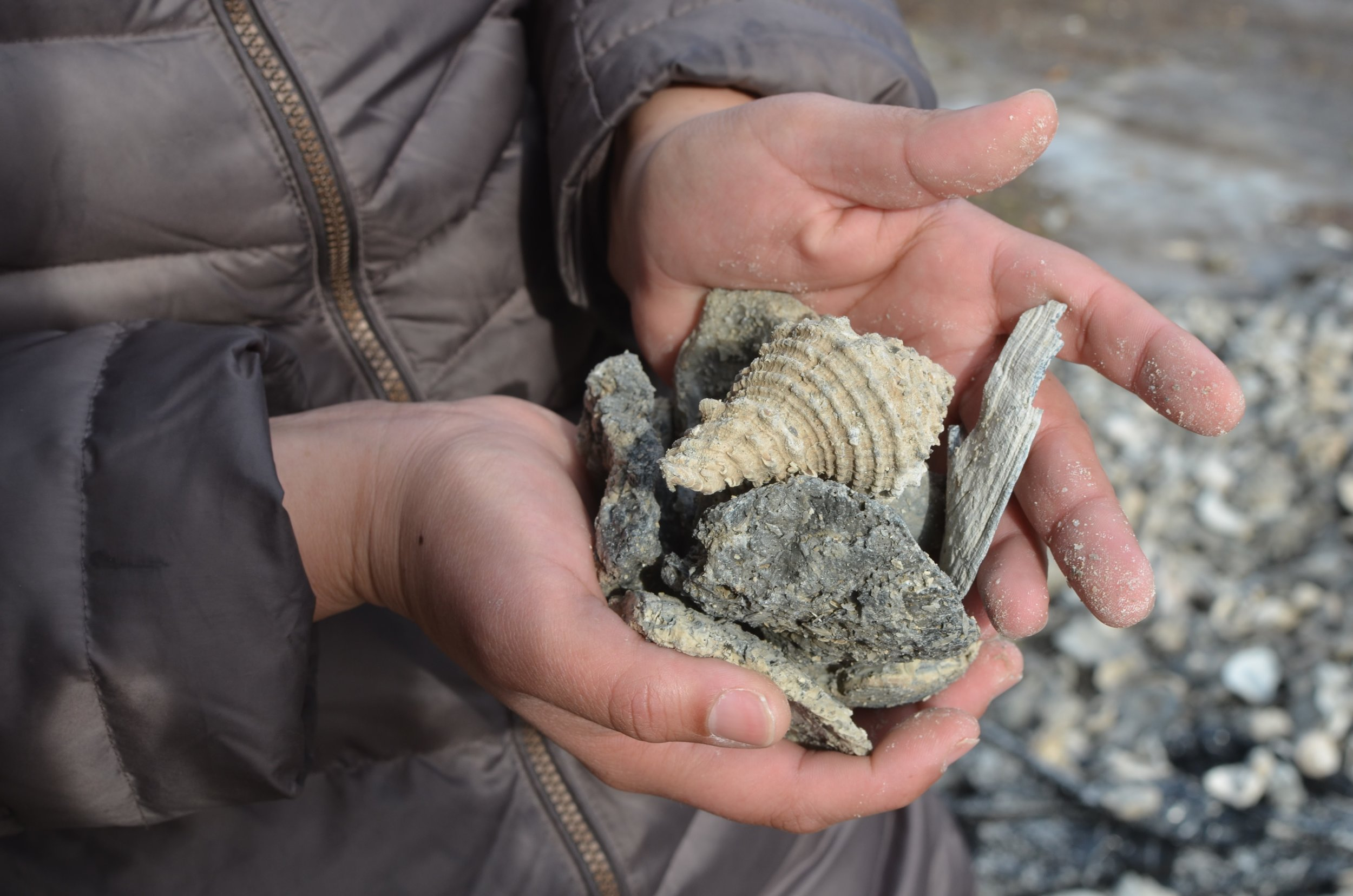 Coastal Habitat Restoration Project Hatchery Technician Nyustash Valdez holds a handful of some calcified shell used as the base of the living oyster reef.