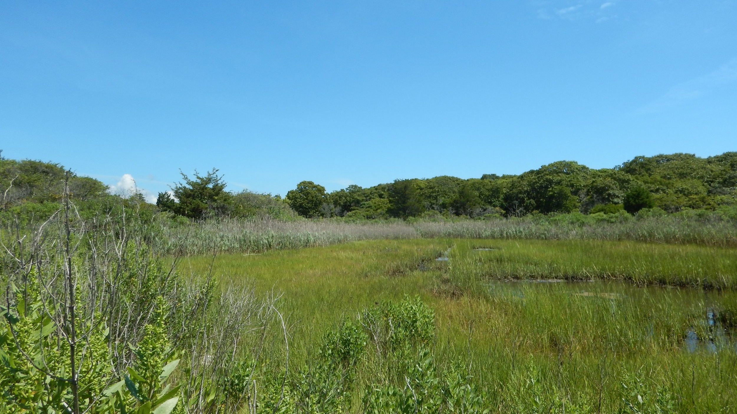 One of the salt marshes in the project area.