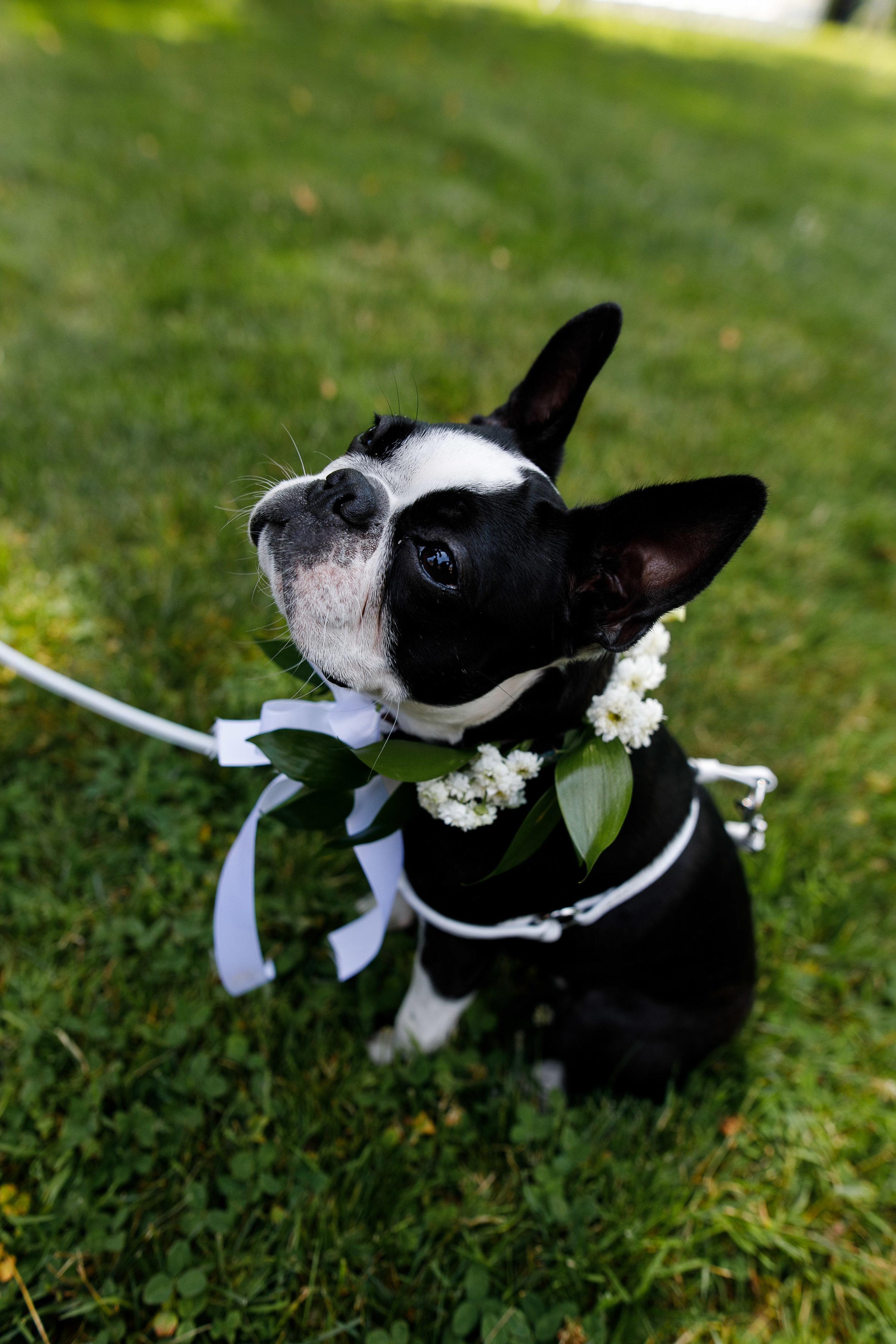 Wedding at Joseph Ambler In Bucks County PA29.jpg