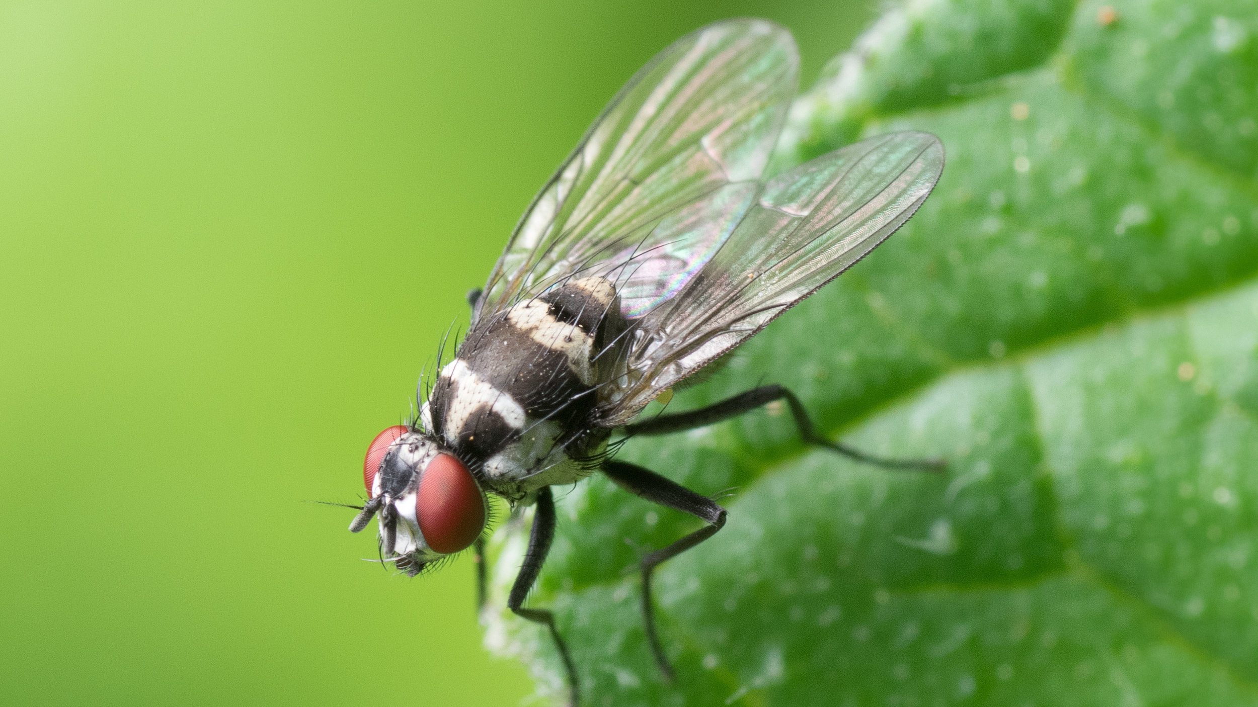 Canva+-+Black+and+Red+Flying+Insect+Perched+on+Green+Leaf.jpg