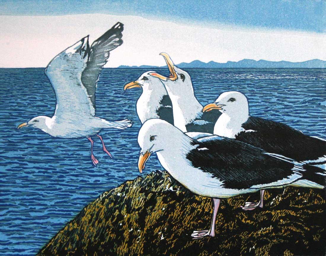 Gulls on the Menai Straits