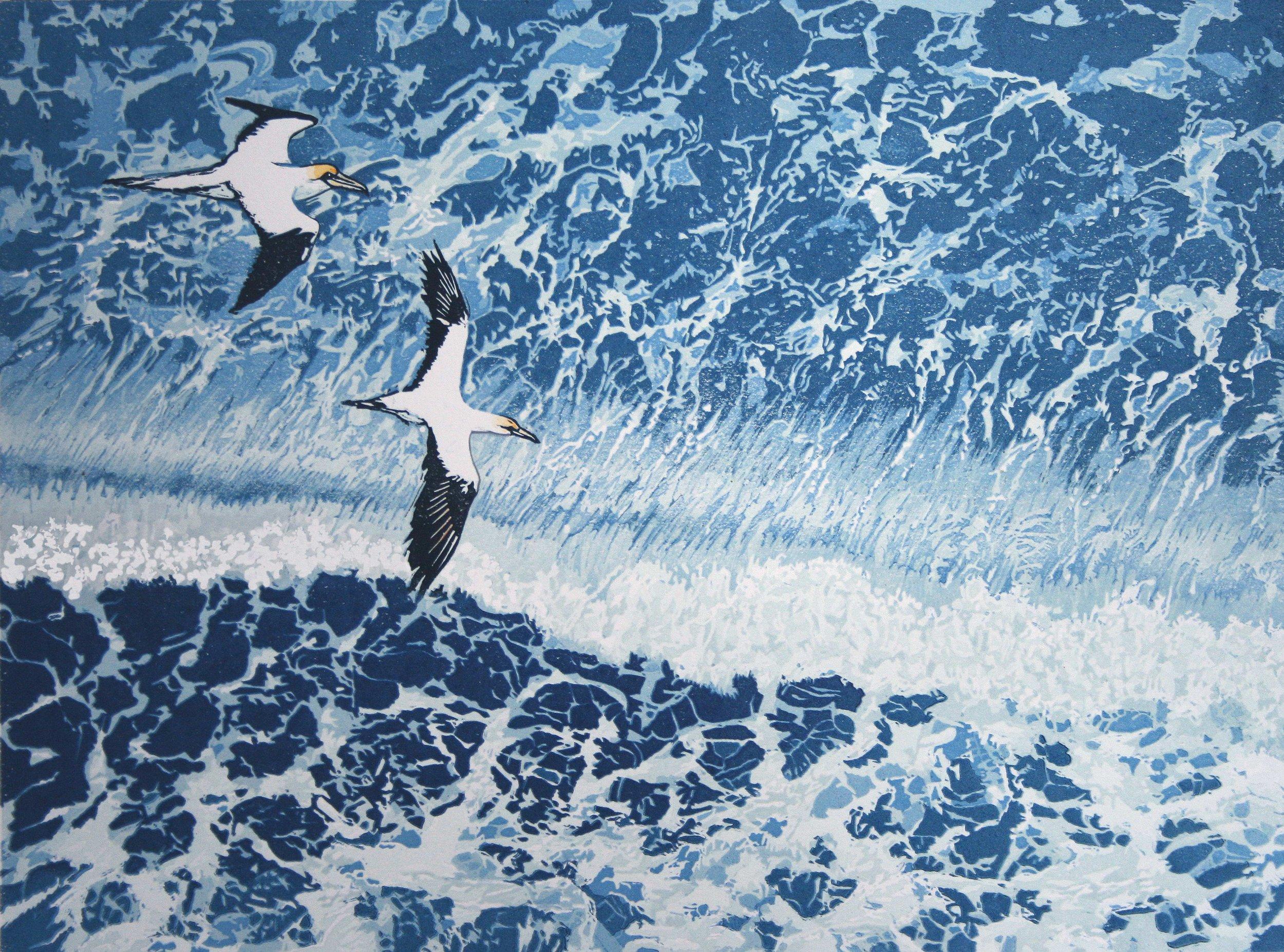 Gannets---From-Bempton-Clif.jpg