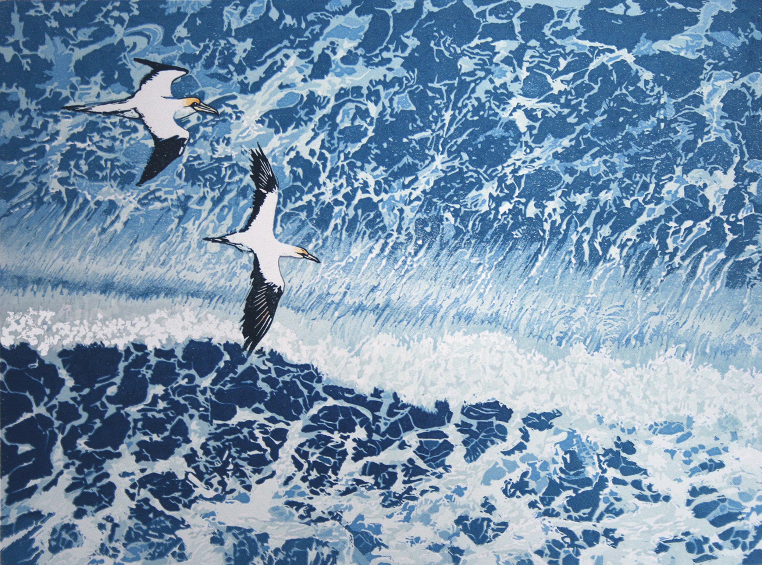 Gannets - From Bempton Cliffs.jpg