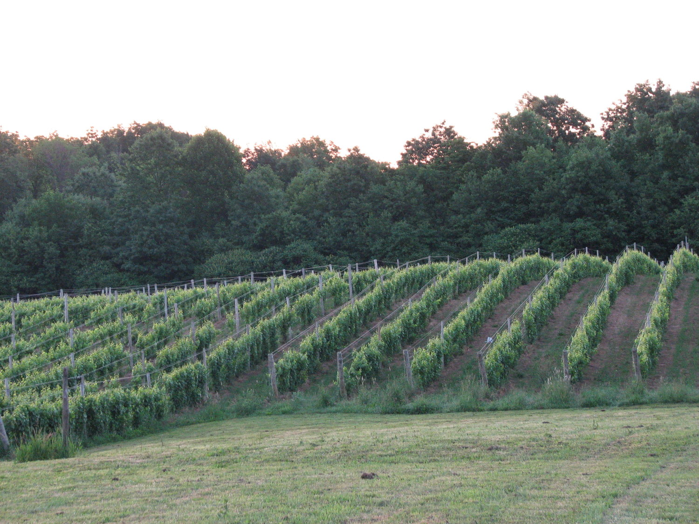 Attractions Vineyard Woods Getaway In Ohio Wine Country