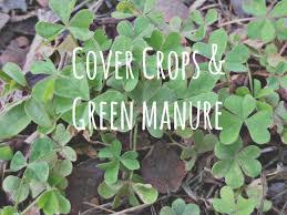 cover crops.jpeg