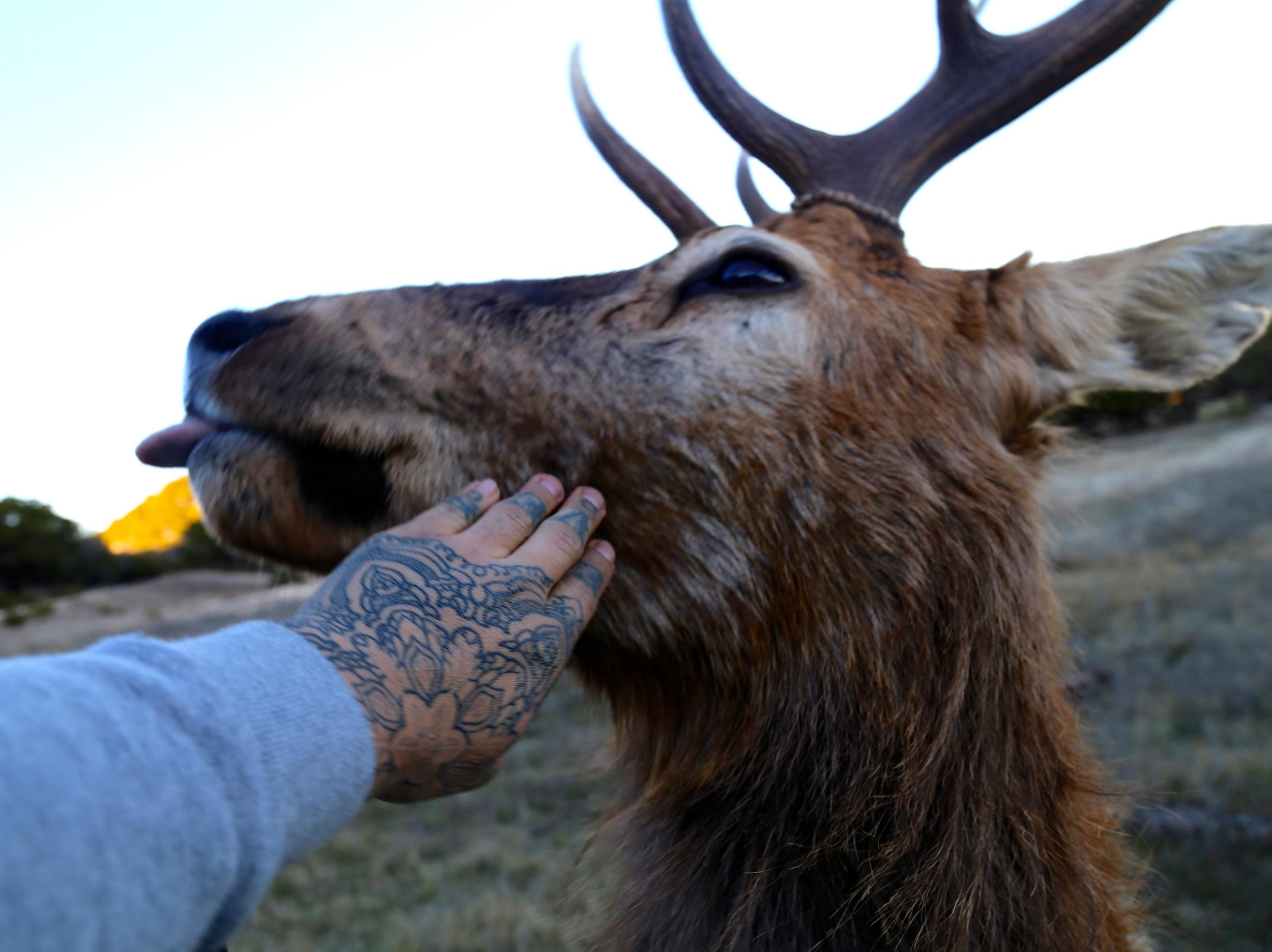 Feeding animals 2 enrique bernal ejay tattoo.JPG