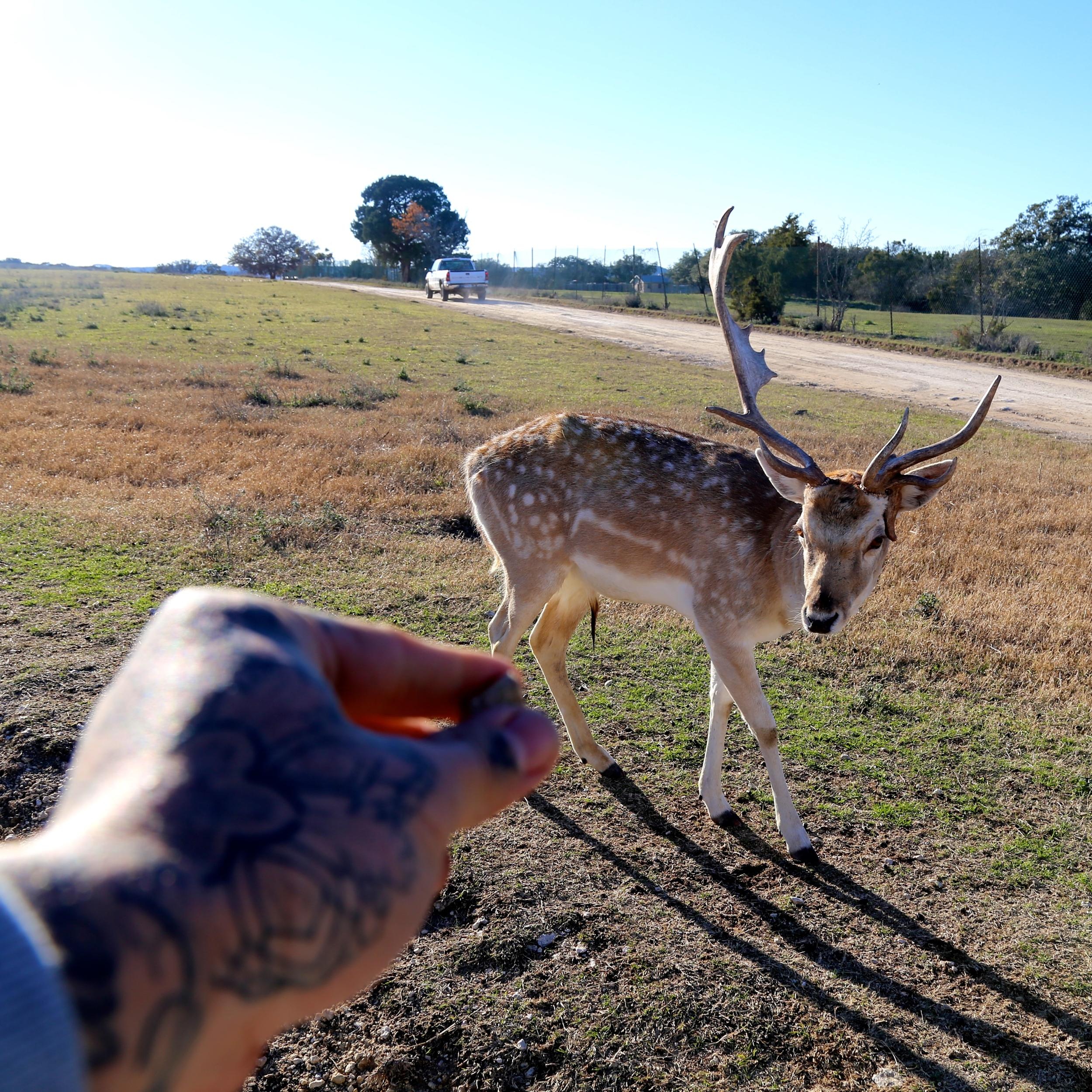 Feeding animals 1 enrique bernal ejay tattoo.JPG
