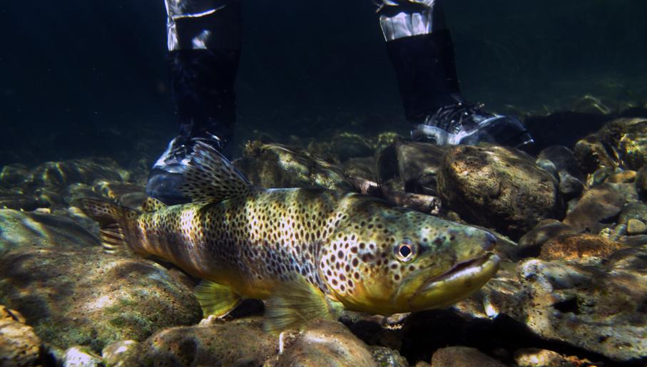 Underwater Brown