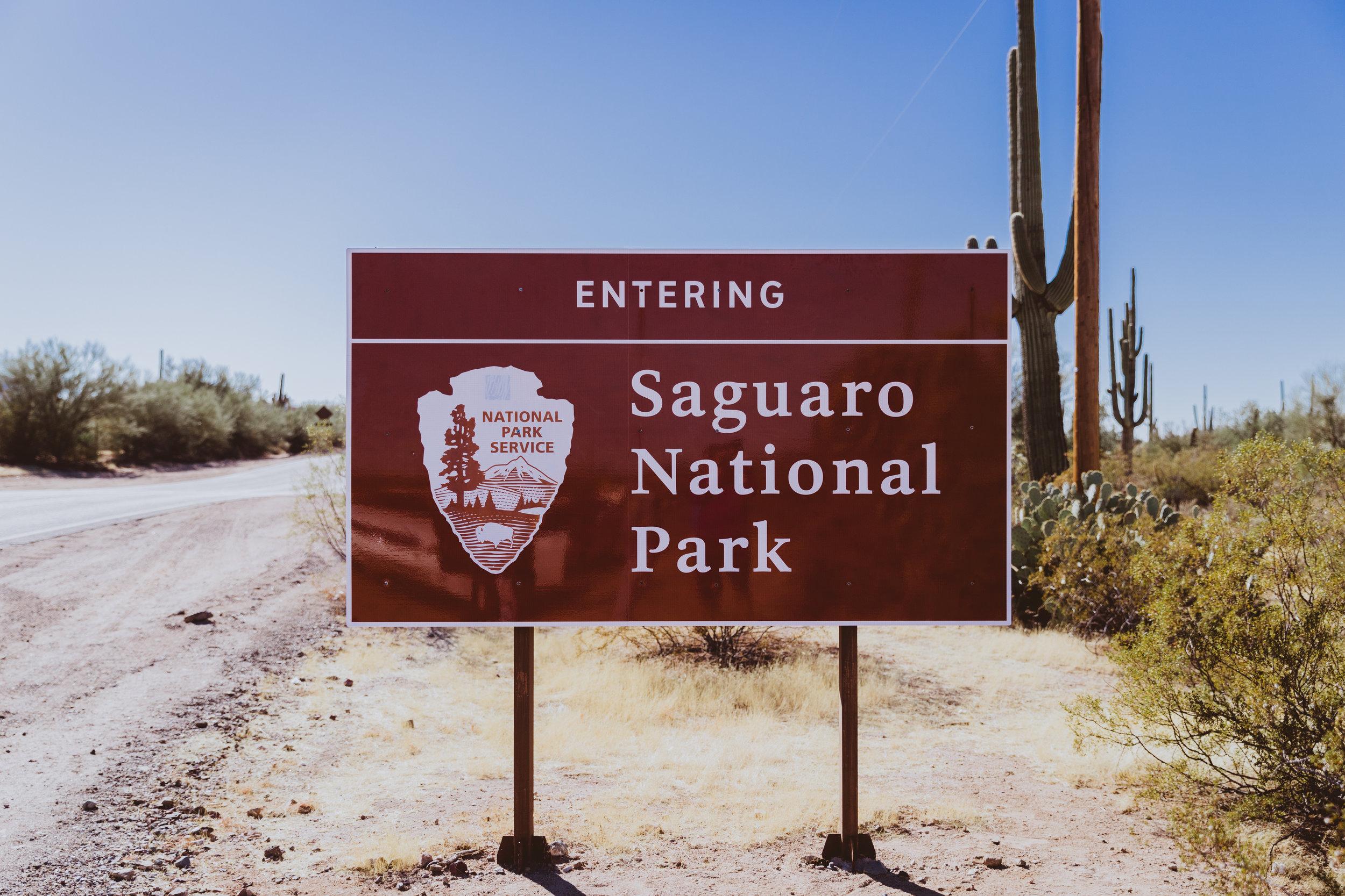 Saguaro Edits (1 of 160).jpg
