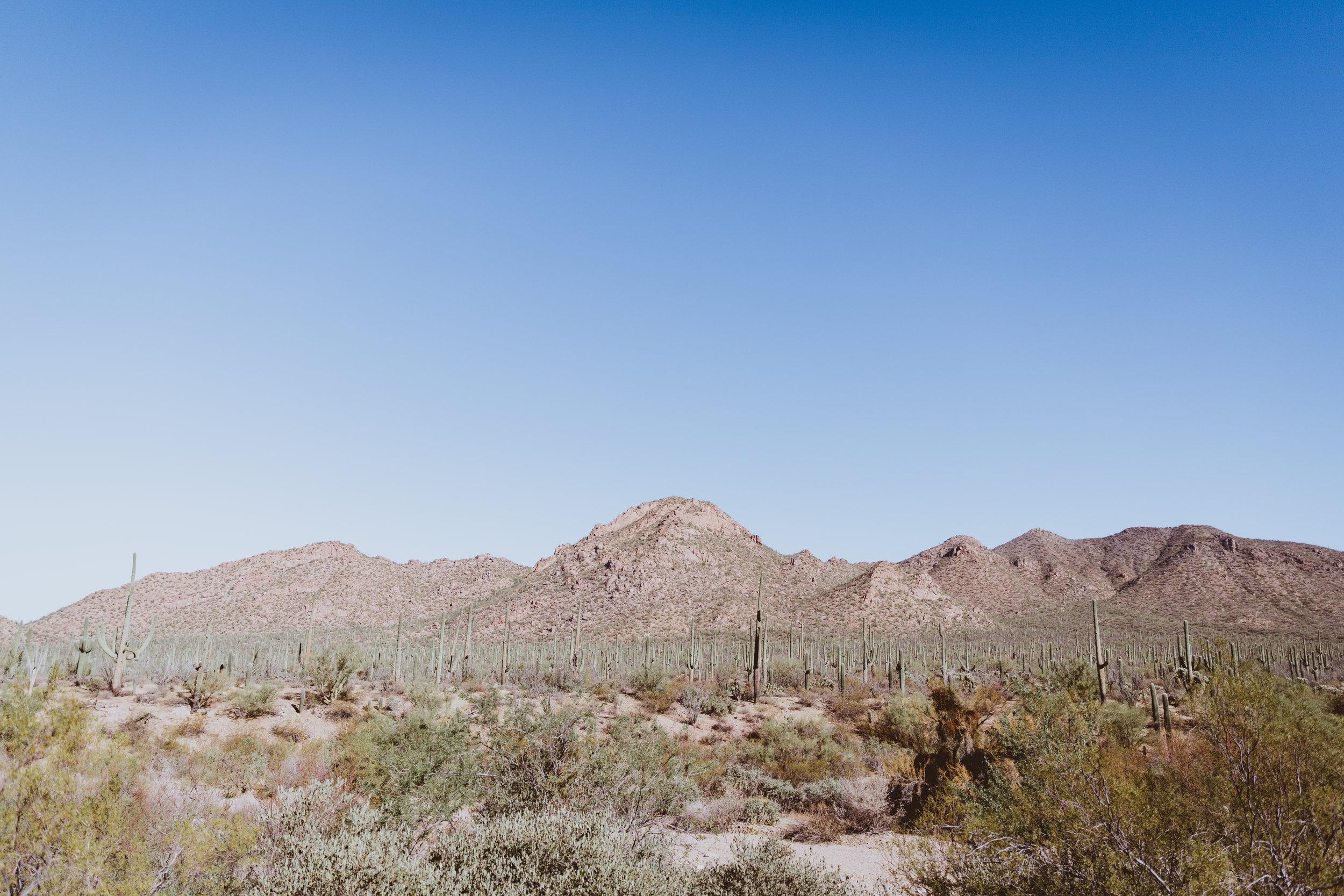 Saguaro Edits (11 of 160).jpg