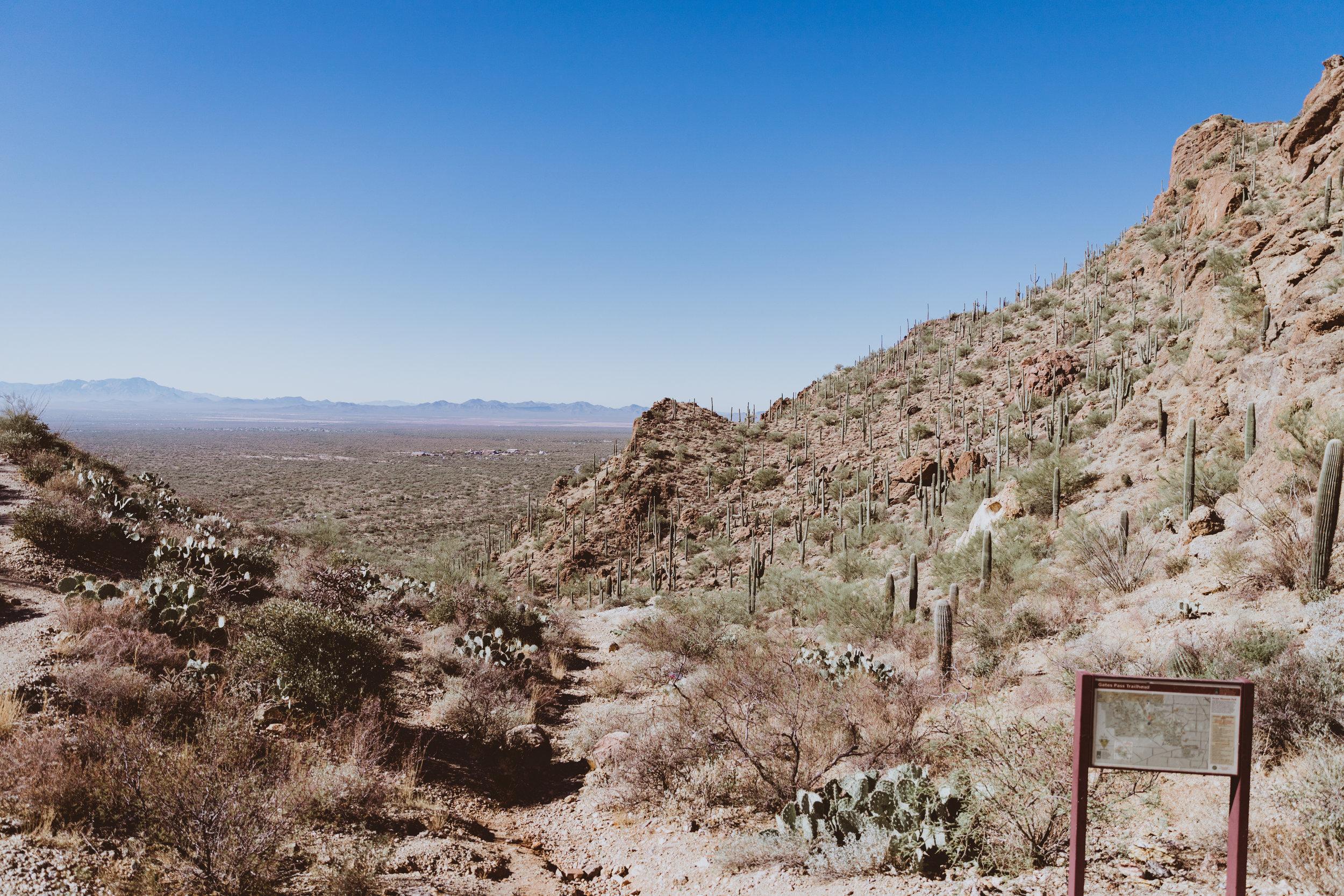 Saguaro Edits (21 of 160).jpg