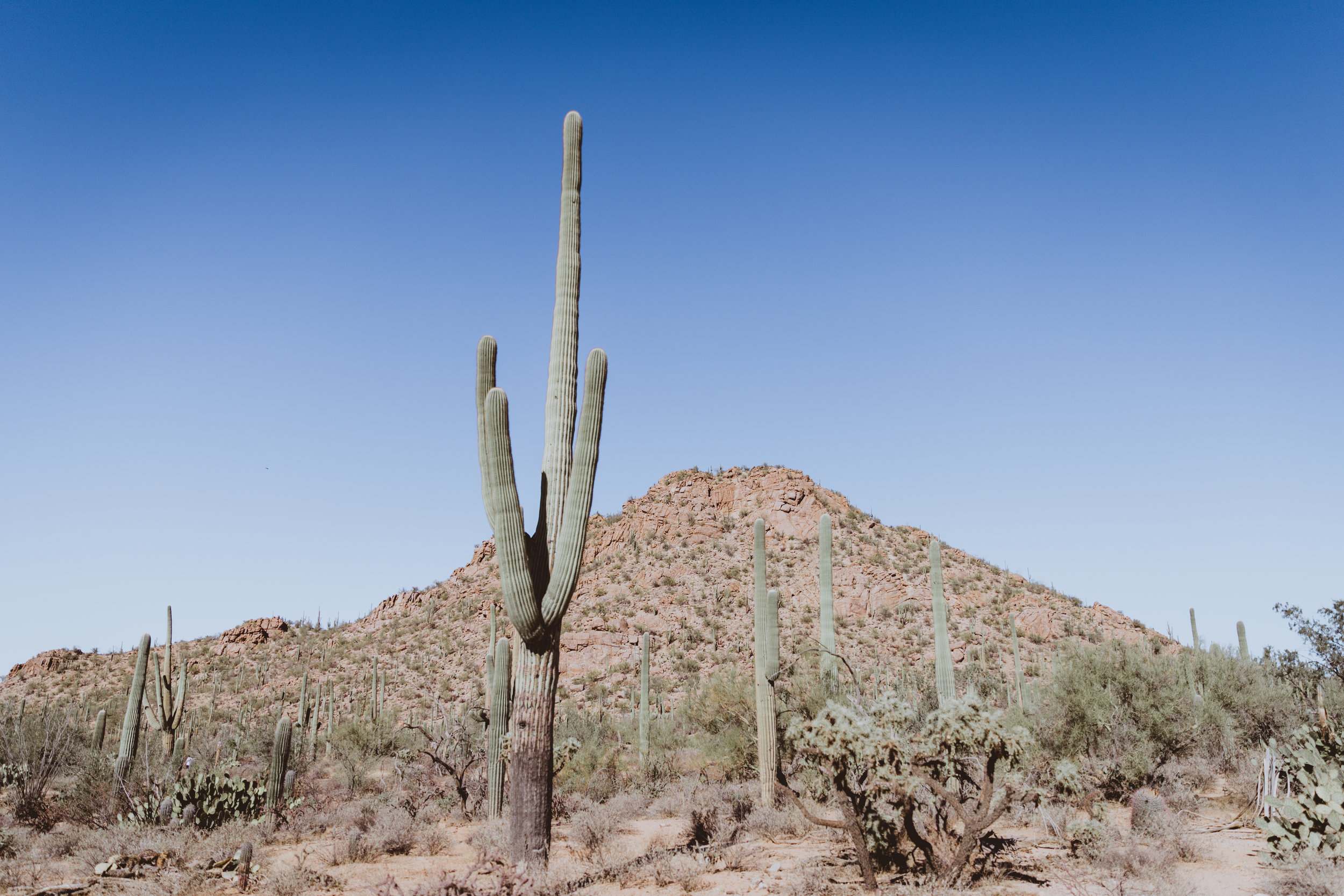 Saguaro Edits (45 of 160).jpg
